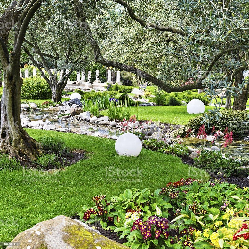japanese oliva trees garden royalty-free stock photo