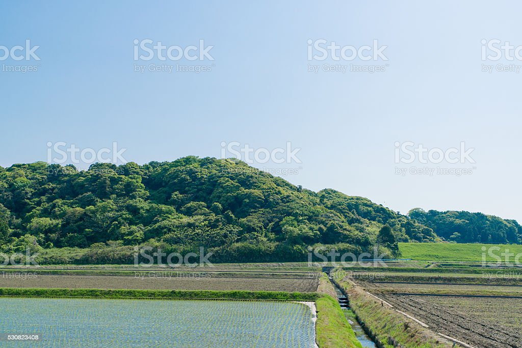 Japanese paddy field image stock photo