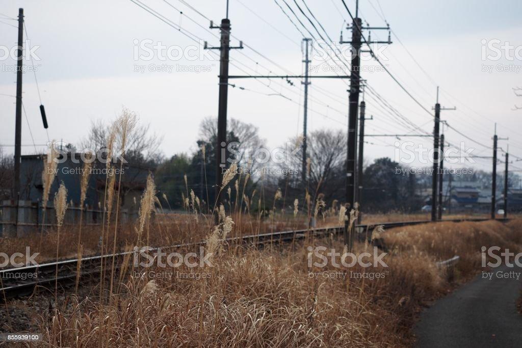 Japanese pampas grass, railroad, autum stock photo