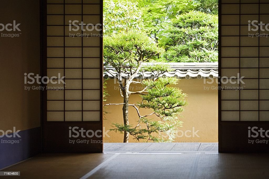 Japanese pine tree stock photo