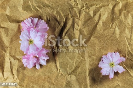 istock Japanese pink cherry flowers on crumpled brown paper. 682193922