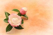 日本は伝統的な紙の上の白い椿の花をピンクします。