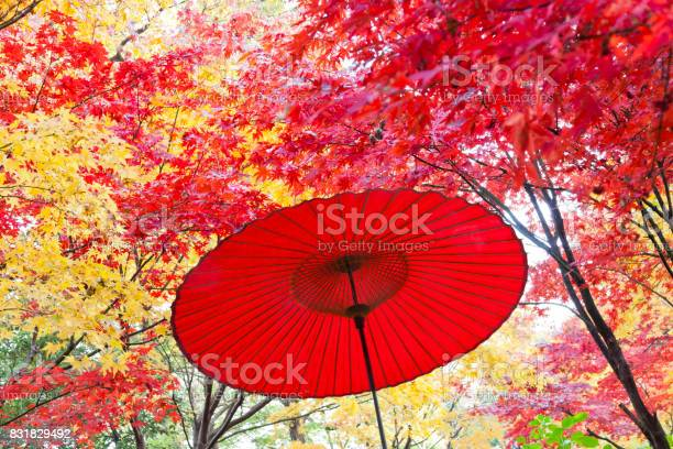 Photo of Japanese Red Umbrella in Autumn Forest