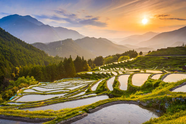 Japanese Rice Terraces Rice terraces at sunset in Maruyama-senmaida, Kumano, Japan. rice paddy stock pictures, royalty-free photos & images