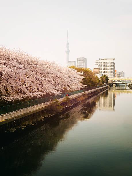 Japanese River in Tokyo stock photo