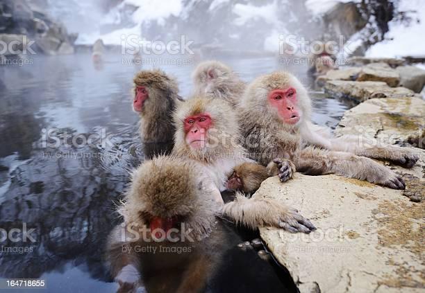 Japanese snow monkey in a hot spring picture id164718655?b=1&k=6&m=164718655&s=612x612&h=zdls75ehmfivrnfcxeflqwcvxi8wwjsemzrfcomtiv8=