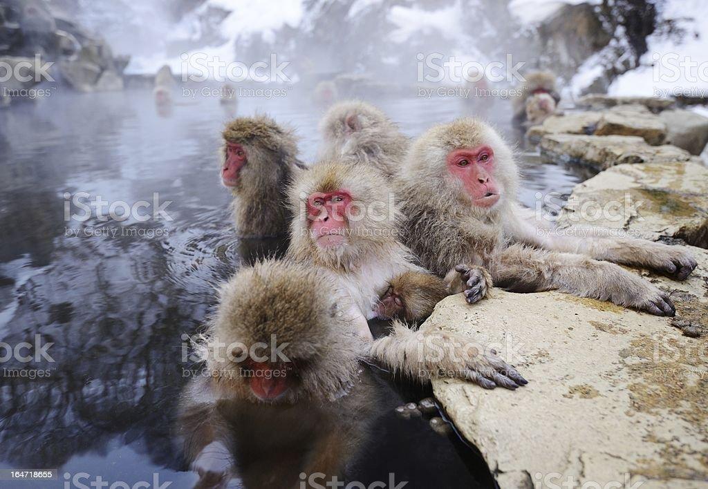 日本の雪猿 ストックフォト