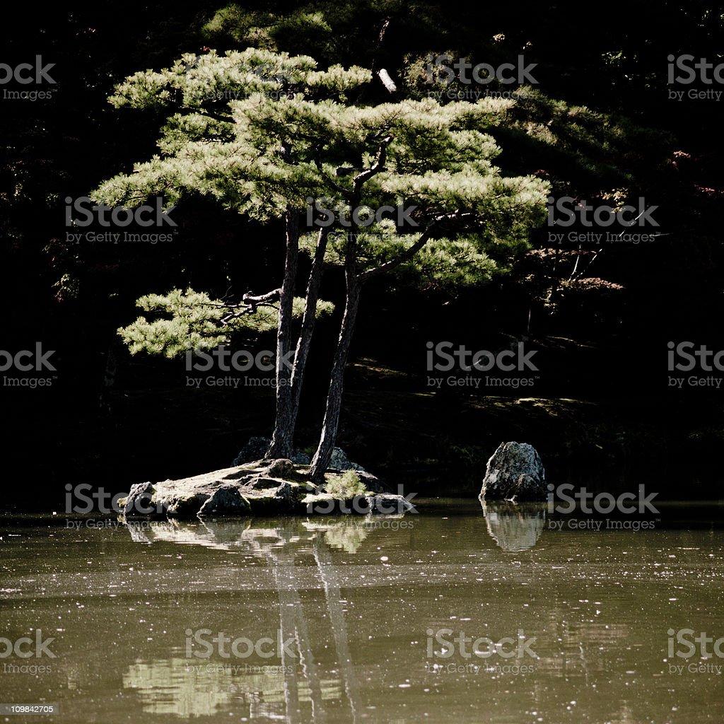 Japanese tree in pond