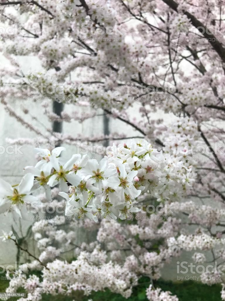 So white garden style