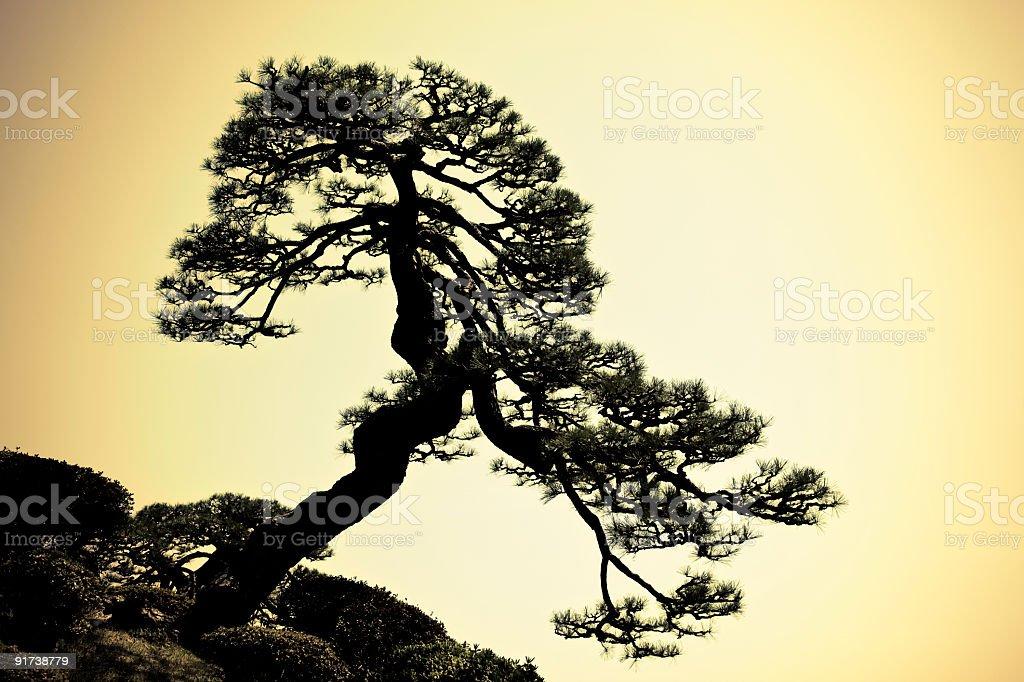 japanese tree silhouette stock photo