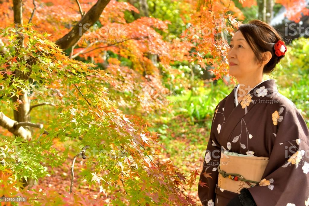 A Japanese woman in kimono is appreciating colorful maple tree by...