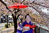 舞妓さんの衣装と髪型は京都の桜を楽しむ日本人女性