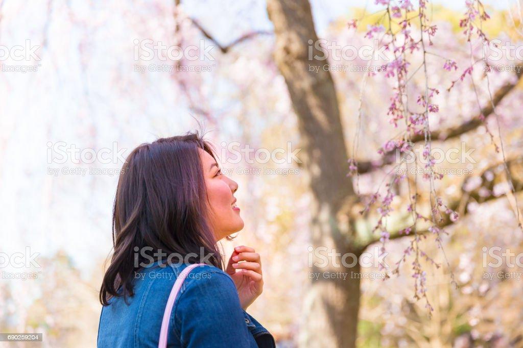 日本の女性の春 ストックフォト