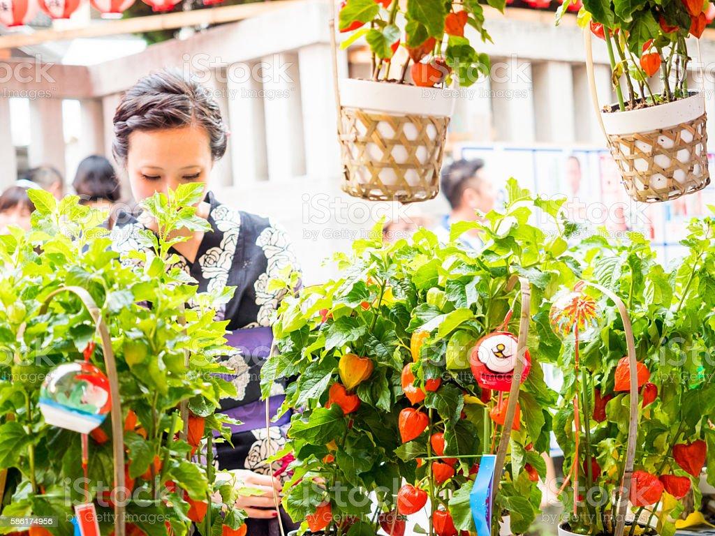Japanese woman watching Houzuki, Ground Cherry. stock photo