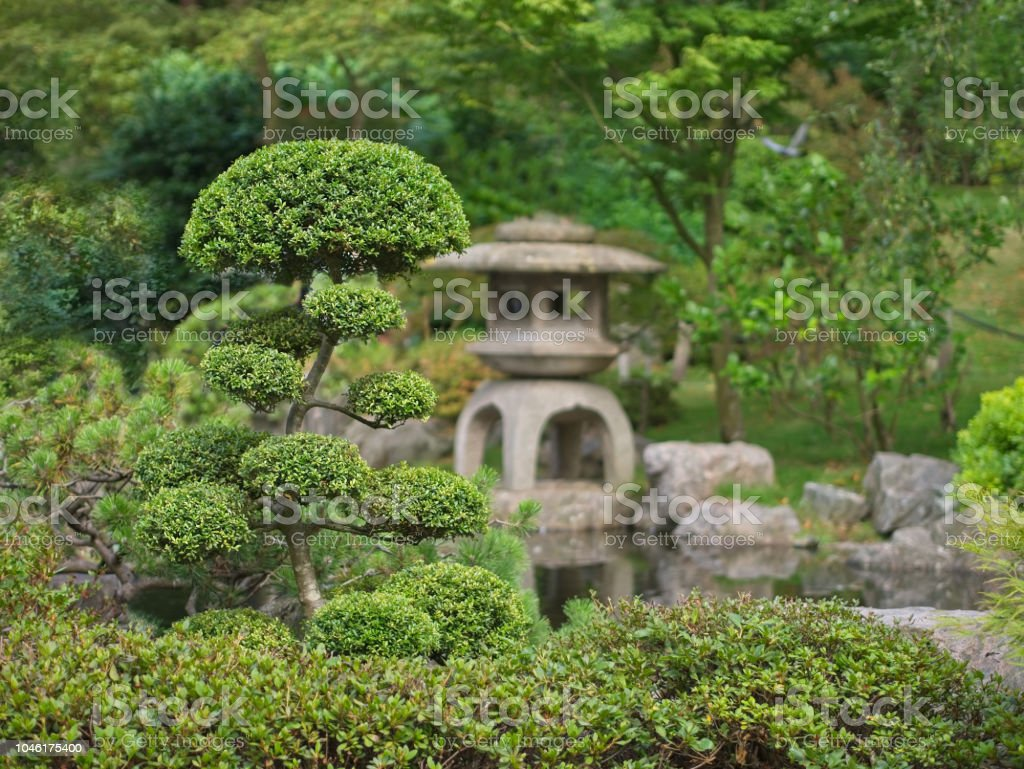 Japanese Zen Garden With Bonsai And Traditional Stone Lantern Stock Photo -  Download Image Now