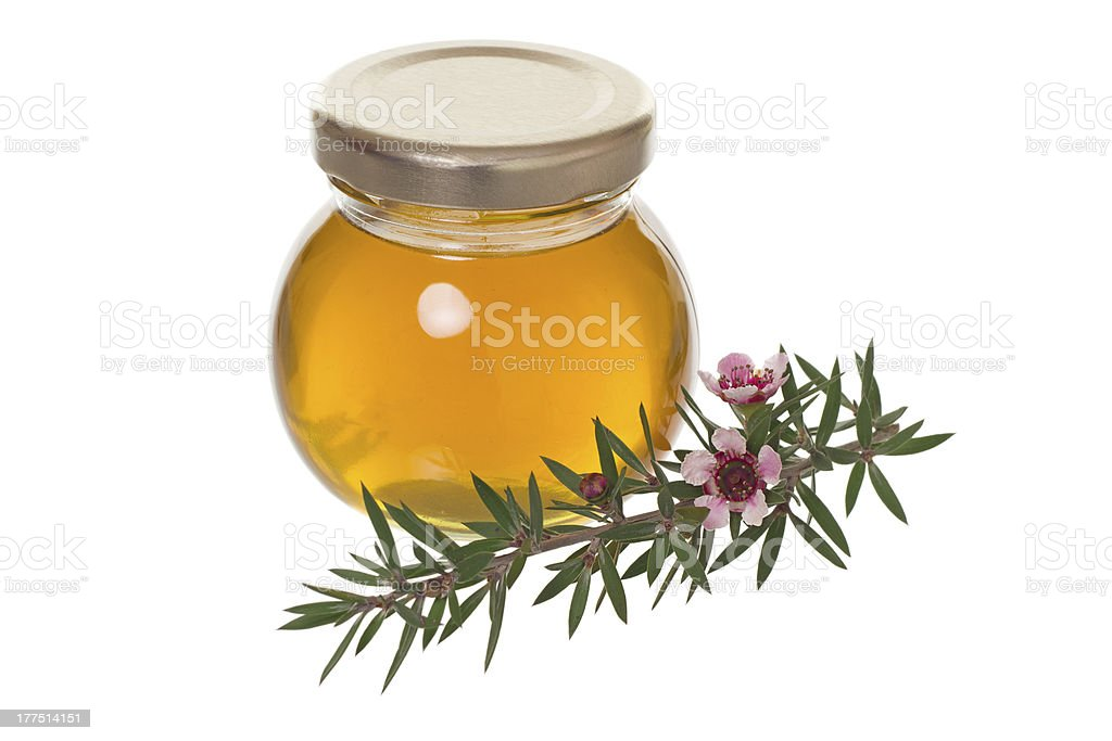 Jar of honey with manuka (tea tree or Leptospermum) flower stock photo