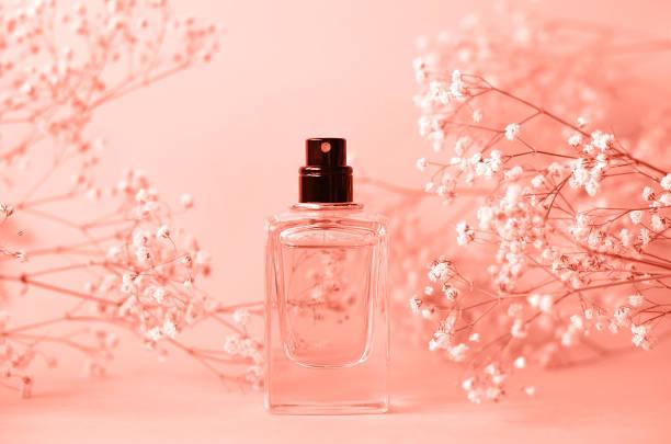 słoik perfum bez czapki z gałązką cypsofili. - perfumowany zdjęcia i obrazy z banku zdjęć