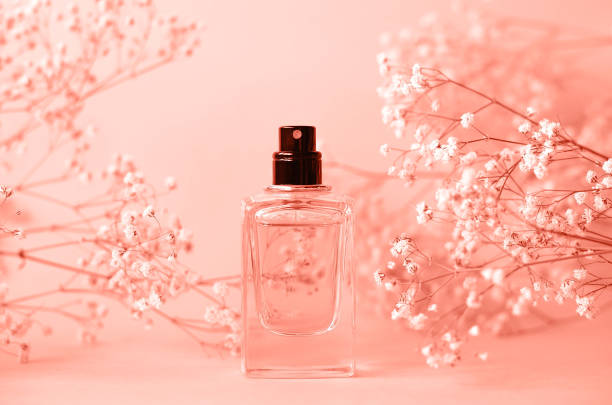 a jar of perfume without a cap with a sprig of gypsophila. - profumi foto e immagini stock