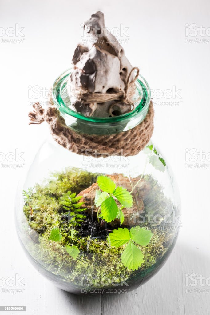 Jar with piece of forest on white table royalty-free stock photo