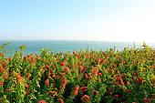 Jardin Frente al Mar