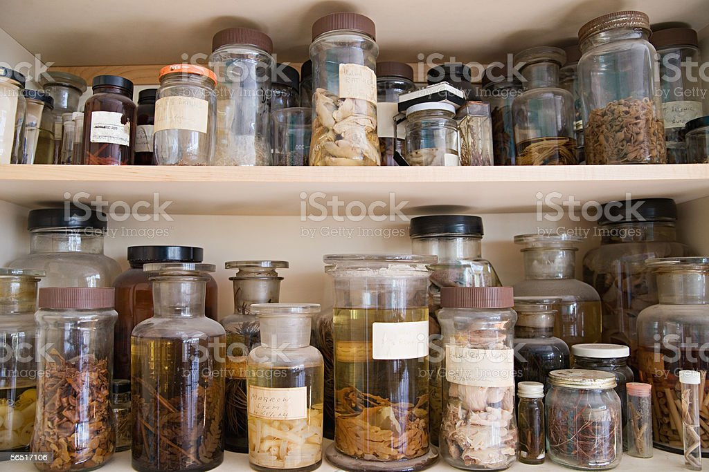 Jars of biological specimens stock photo