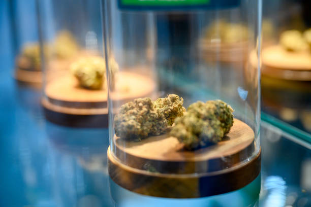 Jars with dried cannabis stock photo