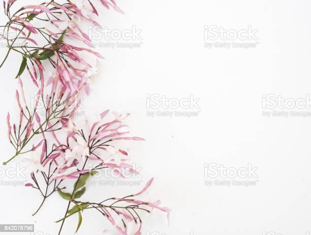 Jasmine flowers from above picture id842078796?b=1&k=6&m=842078796&s=612x612&h=5qtxqxllth8aq pjs8cvkjtztmxo 1n68bovr9x3epa=