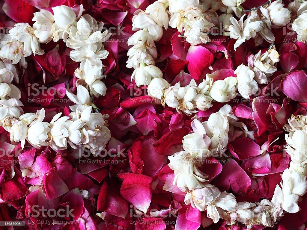 Jasmine Flowers on Rose Petals stock photo