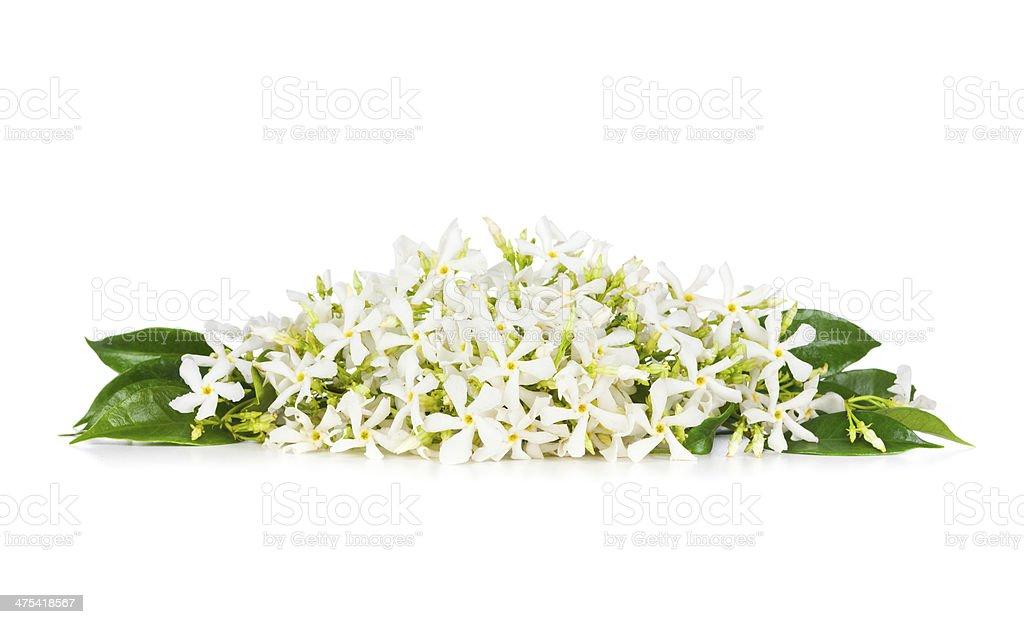 Jasmine flowers stock photo