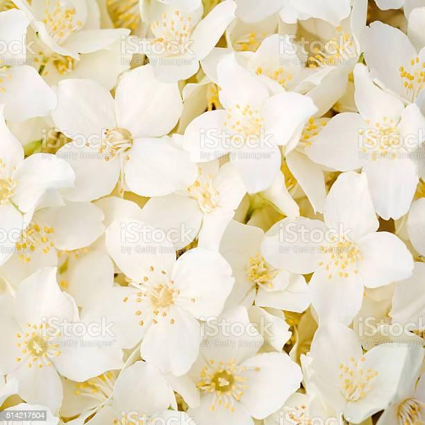 Jasmine flowers picture id514217504?b=1&k=6&m=514217504&s=612x612&h=0aogjobz4 l4uacr59fpwciakmpjs3cnp4qzudjirc0=