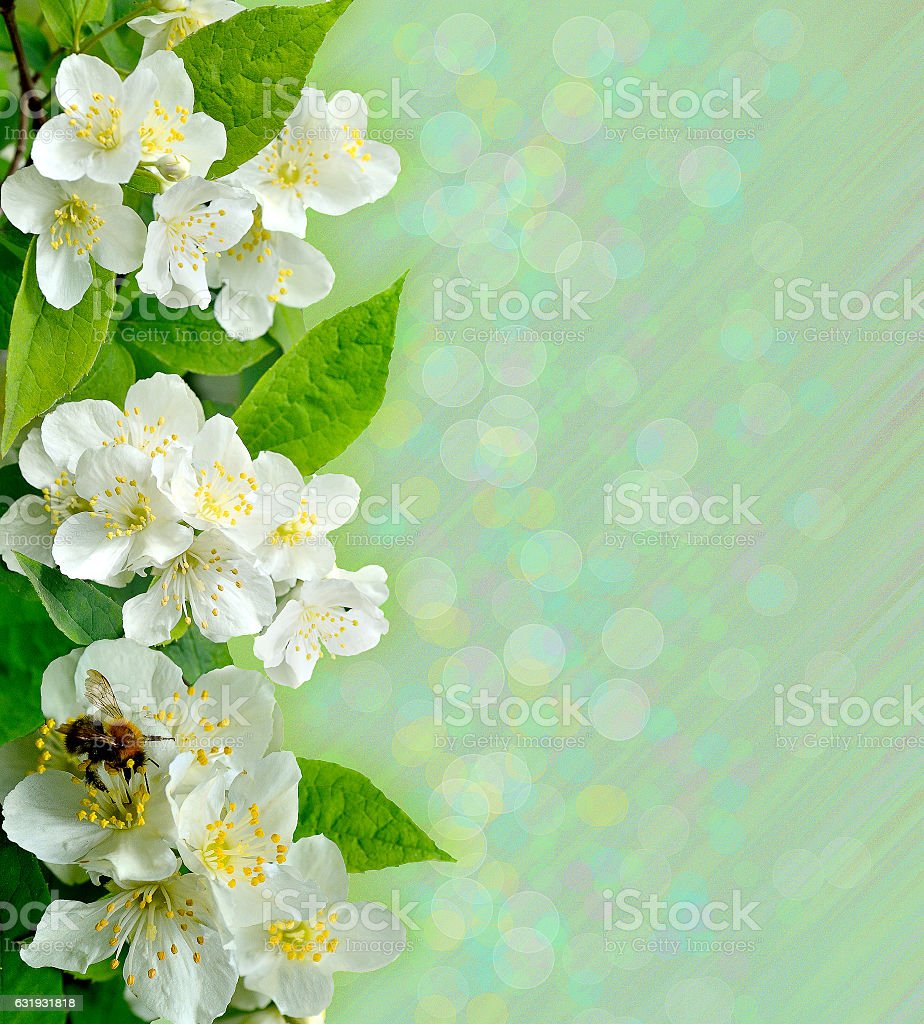 Jasmine Flowers With Bee Stock Photo More Pictures Of Aromatherapy