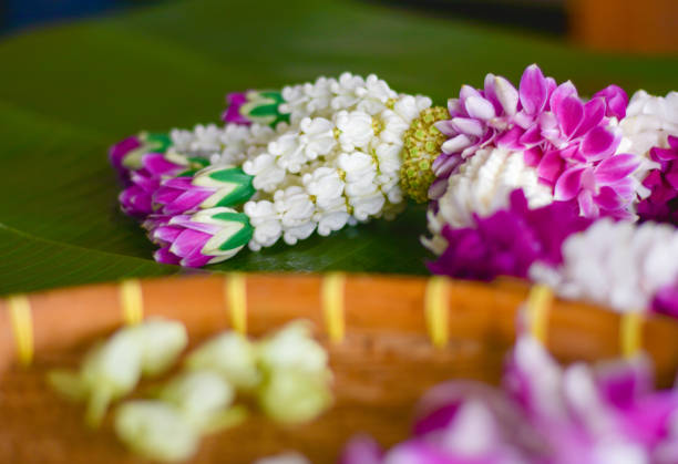 Jasmine garland is very famous in Thailand stock photo
