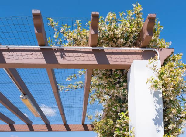 jasmin über eine auto-port-pergola, die schatten bieten wächst - garagen pergola stock-fotos und bilder