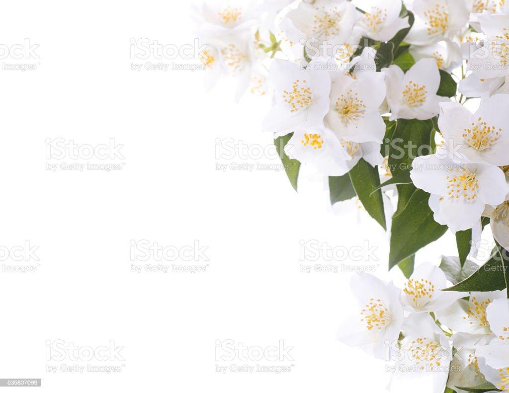Jasmine white flower stock photo more pictures of 2015 istock jasmine white flower royalty free stock photo izmirmasajfo Choice Image