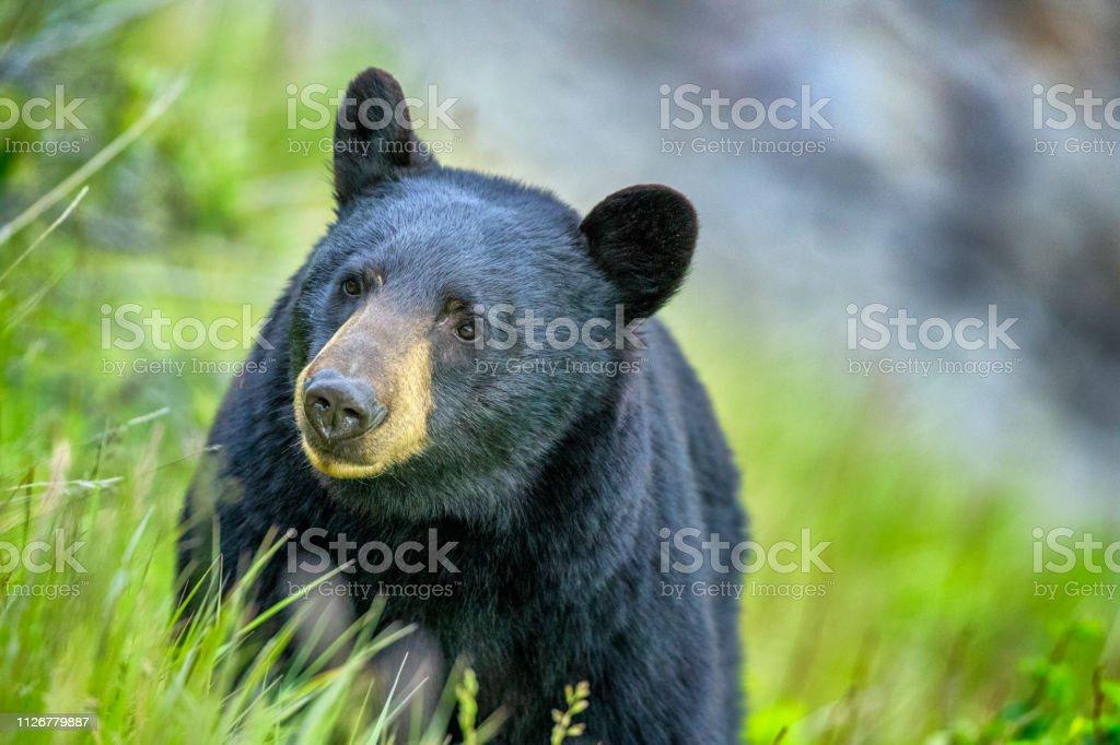 Jasper National Park in Alberta Canada stock photo