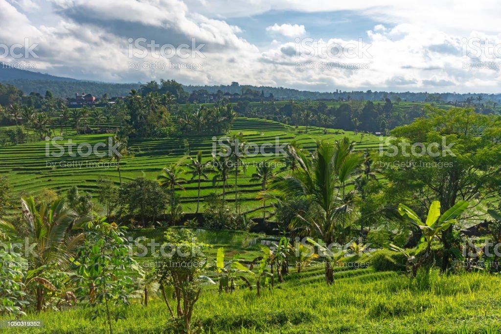 Jatiluwih Rice Terraces In Tabanan Bali Stock Photo More Pictures