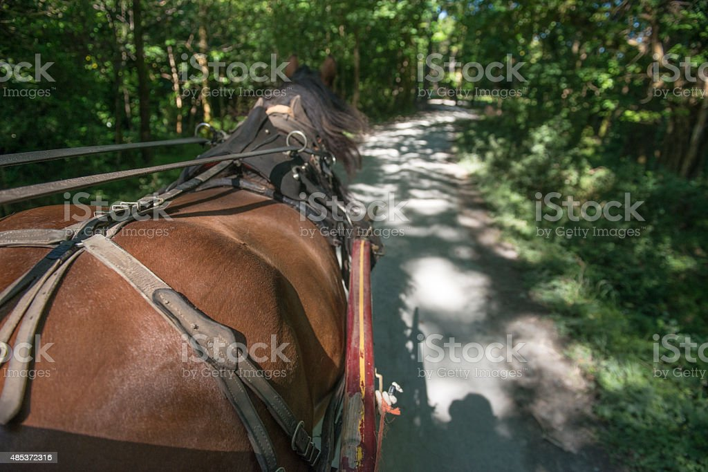 Jaunting car in nature royalty-free stock photo