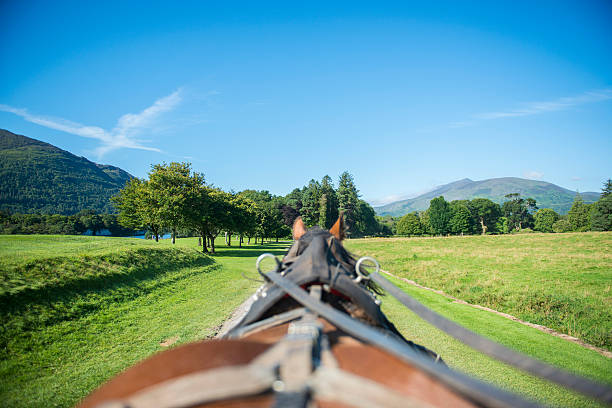 Jaunting in Killarney In the moment view from a horse and trap of Killarney National Park, Killarney, Co. Kerry, Ireland working animal stock pictures, royalty-free photos & images