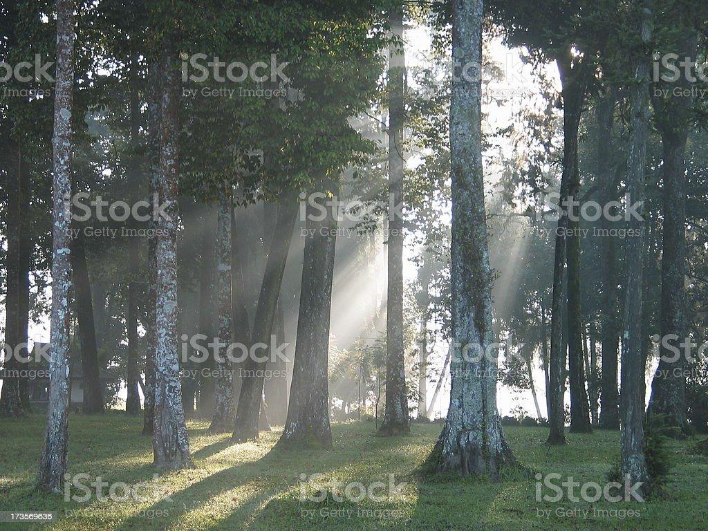 Java Sunrise at Tea Plantation royalty-free stock photo