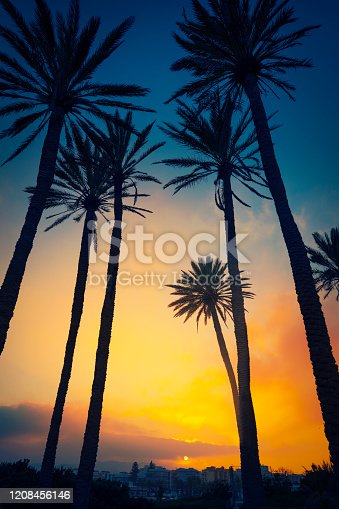 Javea Xabia sunset sky with tropical palm trees in Alicante of Spain