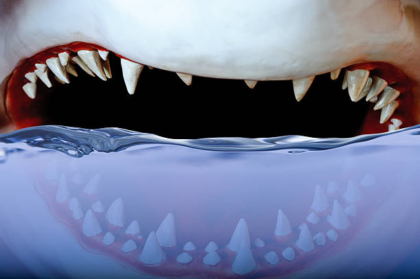 Jaws  deathly stock pictures, royalty-free photos & images