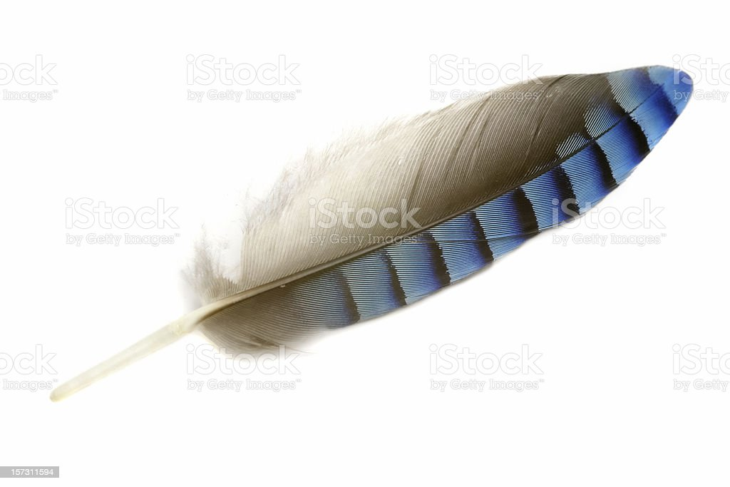 Jay feather stock photo