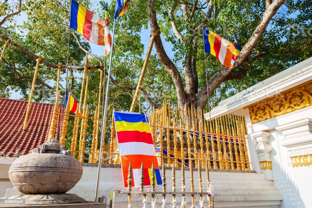 Jaya Sri Maha Bodhi - Photo