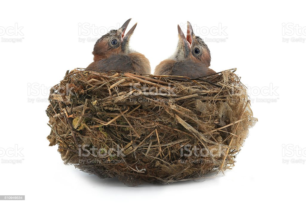 jay's nest stock photo