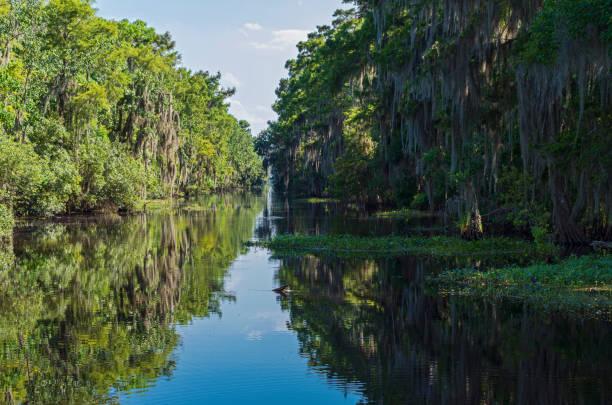 Jean Lafitte National Park Wilderness in Louisiana stock photo