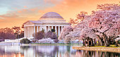 Jefferson Memorial during the Cherry Blossom Festival in Washington, DC, United States