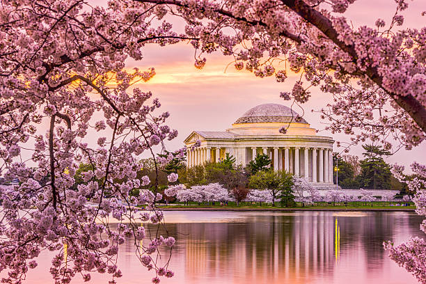 Jefferson Memorial in Spring stock photo