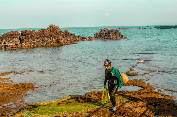 A Jeju 'haenyeo' (women diver) returns from her dive. A Jeju 'haenyeo' (women diver) walks on the rocky surface after just completing her dive. seogwipo stock pictures, royalty-free photos & images