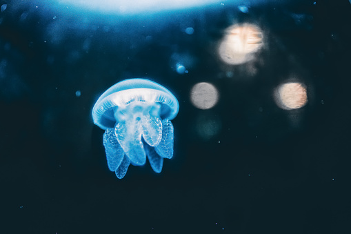 jelly fish in the water