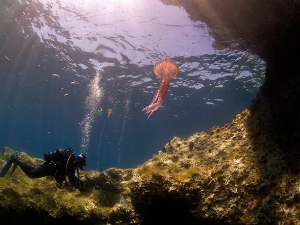 jelly fish & scuba diver stock photo